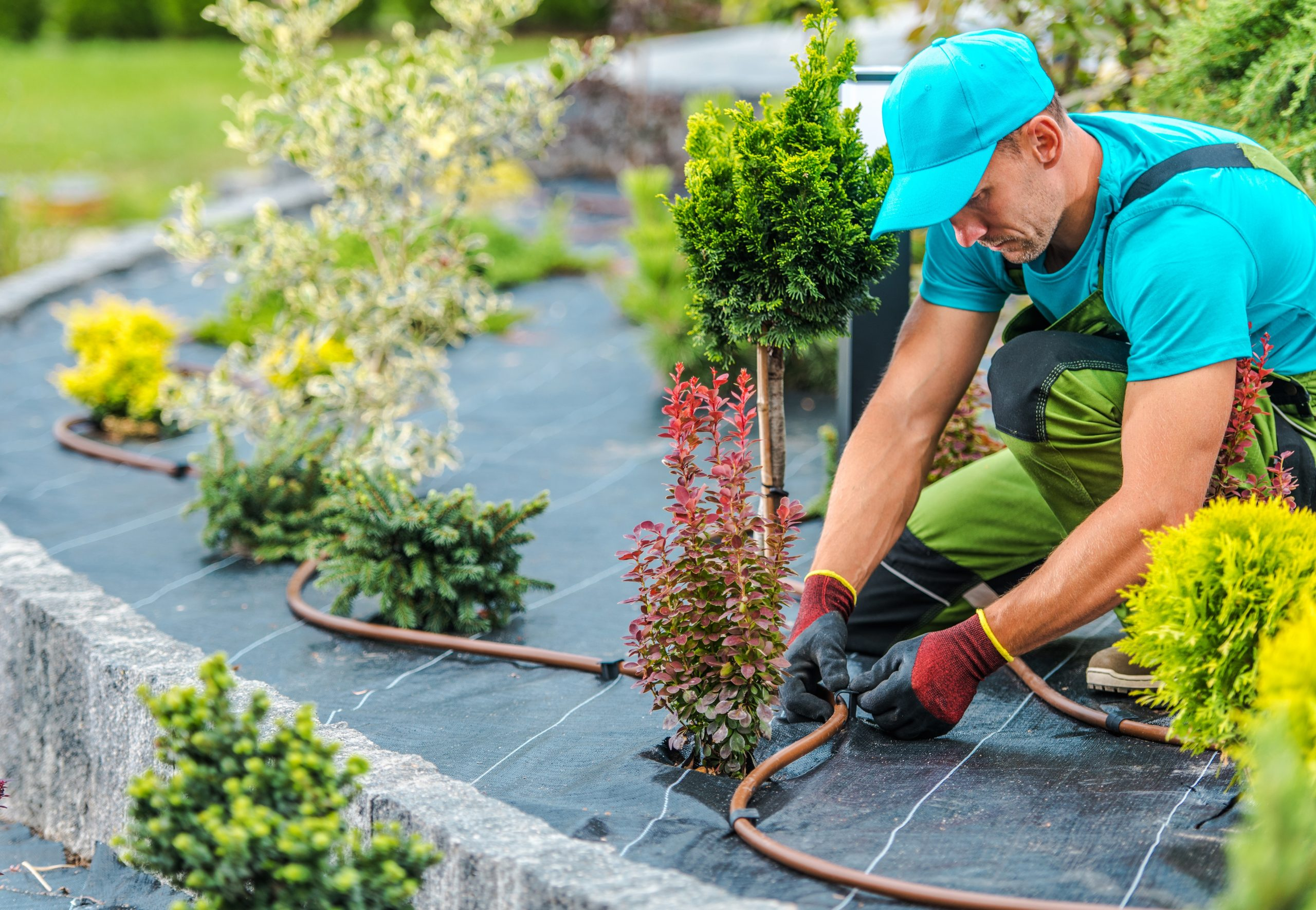 Landscaping Business Accounting Services